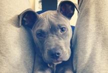 Pit Bulls Need Love Too / by Ashley Kline