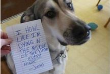 Dog Shaming / by Tricia Fling