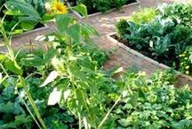 vegetable garden / Time and effort is taken to build these boards.  COURTEOUS PINNING IS APPRECIATED