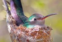 bowerbird and other birds