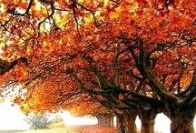 Falloween / by Penny Hinch
