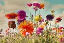 Sunny Weather / Warm, sunny weather inspiration  / by PiccoliNY
