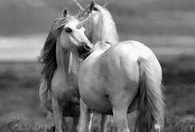 Unicorn / Unicorns of loooooove ✨