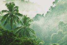 Jungle / All things green