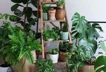 URBAN JUNGLE ^^indoor plants in a mess^^ / the interior gardener within me is under GARDEN THERAPY. Plant lovers Artificial Paradise. Botanical inspiration makes my home a happy home!  All things plants and urban jungle. Hashtags #urbanjungle #greenery #gardentherapy