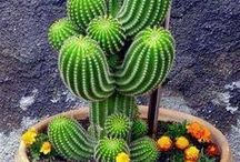 {secret} PLANT SOCIETY for succulent addict ^^it's not just me^^ / GARDEN TERAPY. Succulent style. Succulents and cactus.
