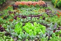 KITCHEN GARDEN / EPIC GARDENING. The structure and beauty of the potager garden. Cottage style, French, English, small, large and everything in between. Design ideas, fences, borders, gardening, paths, brick, pea gravel, raised beds. Kitchen Gardens, Vegetable Gardens, Structured Garden Designs. edible garden - vegetable garden - gardening tips