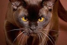 PETS / cats & kittens, dogs & puppies, rabbits, turtles, birds