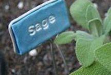 {diy} garden & growables / by Dawn Selene