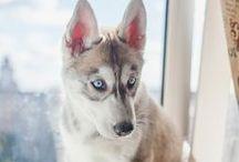 puppies n such. / by Kayla Gott