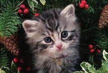 KittyKats / by Linda Williams