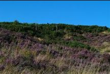 Beautiful Cannock Chase / Britain's smallest designated area of outstanding natural beauty.