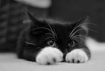 B/W Cats