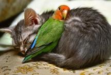 Love / And strange bedfellows.  / by Gala Nightowl