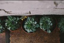 plants  / by Paikea S