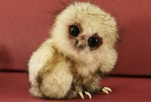 Cute Cute Cute Cute Cute