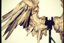 Wings / by Eclectic Pelican