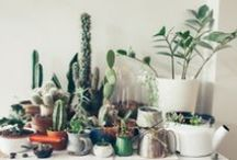 Dwell: indoor garden / by Meredith Morrow