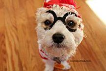 Charlie My Doggie! / by Jennifer MomSpotted