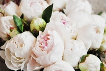 Wedding  / by Caitlin Fisher {Daily Cup of Couture}