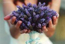 Flowers / by Tabby Henderson