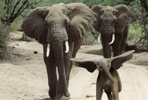 Elephants / by Kalie Ruddle
