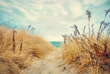 Sea and Sand / by Kalie Ruddle