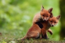 Red and Foxy / by Kalie Ruddle