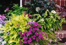 Home: Gardening