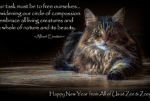 Catable Quotes / Stunning pictures of cats with a famous cat quote.