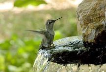 Birdfeeders & Birdbaths / by Marcie Pelletier-Potvin