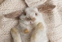 Bunnies are the Best / Need I say more?? / by Jenny Hoople