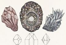 Natural History / Nature collections, cabinets of wonder & interesting specimens. / by Jenny Hoople