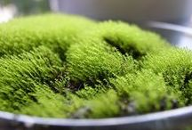 Moss and Ferns / Green, moist, strange and wonderful! / by Jenny Hoople