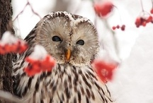 """""""Owl"""" Always Luv Owls / Owls symbolize wisdom, mystery, vision & intelligence.  They are also so beautiful - they fascinate me! / by Charlene Luzum"""