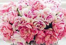 Flora / by R a q u e l