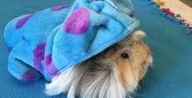 My lovely pet / EL AMOR ES UNIVERSAL, ES PARTE DE NUESTRA ESENCIA...PERO EL DE TU MASCOTA ES DE LOS MAS BELLOS ,SIEMPRE ESTA AHI......Guinea Pigs