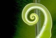 Spirals in Nature / Spirals and sacred geometry / by Jenny Hoople