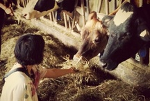 The Langley Circle Farm Tour / by The Langley Explorer
