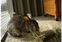 Favourite Rabbit Welfare Sites / Websites with excellent rabbit care and welfare information, and rabbit rescue shelters.