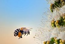 lovely bees / Bees, honey and comb and the inspiration it brings.