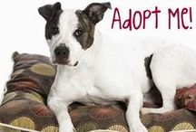 Adoptable Dogs / These dogs need a forever home.  Please help by sharing. / by Dogs N Pawz
