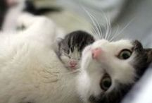 Savvy Cats / All things meow for our fellow crazy cat people including cat tips, cute cat pictures, cute cat videos, cat crafts, cat DIY projects, and more.