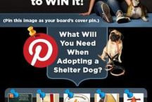 What an Adopted Shelter Dog Needs / These are things that I think every shelter dog might need or want!  Win a year's supply of free dog food from Nutrish!  Part of Rachael Ray's Nutrish Pin It To Win It!  Go to http://dogsnpawz.com to enter! / by Dogs N Pawz