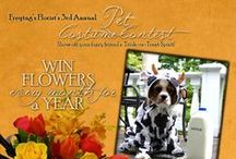 Halloween Pet Costumes / Halloween is approaching and not only do you need to plan your costume-- but you need coordinate your pet's ensemble. Here are some of our favorites! / by Freytag's Florist