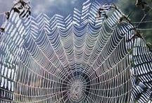 September 2014-Spider webs