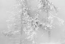 January 2015-Snow