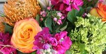 Springboard! / Celebrate all things Spring. Spring flowers & plants in Austin, TX from Freytag's Florist.