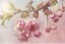 April 2015-Blossoms / by Mellifera Bees