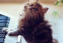 soft kitty / by Eleanor Goodridge